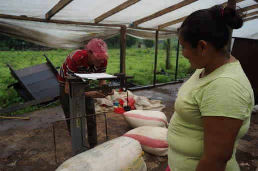 El rubro Cacao es uno de los que más auge ha venido tomando en los últimos años en el Triángulo Minero, el cual aporta aproximadamente entre el 30-35% de la producción nacional del país, lo que significan unas 1,200 – 1,500 toneladas de acuerdo a datos de la empresa RITTER SPORT NICARAGUA S.A, principal mercado de este rubro en el país, sin embargo el aporte de las mujeres productoras en la producción es invisibilizado en las coberturas mediáticas.