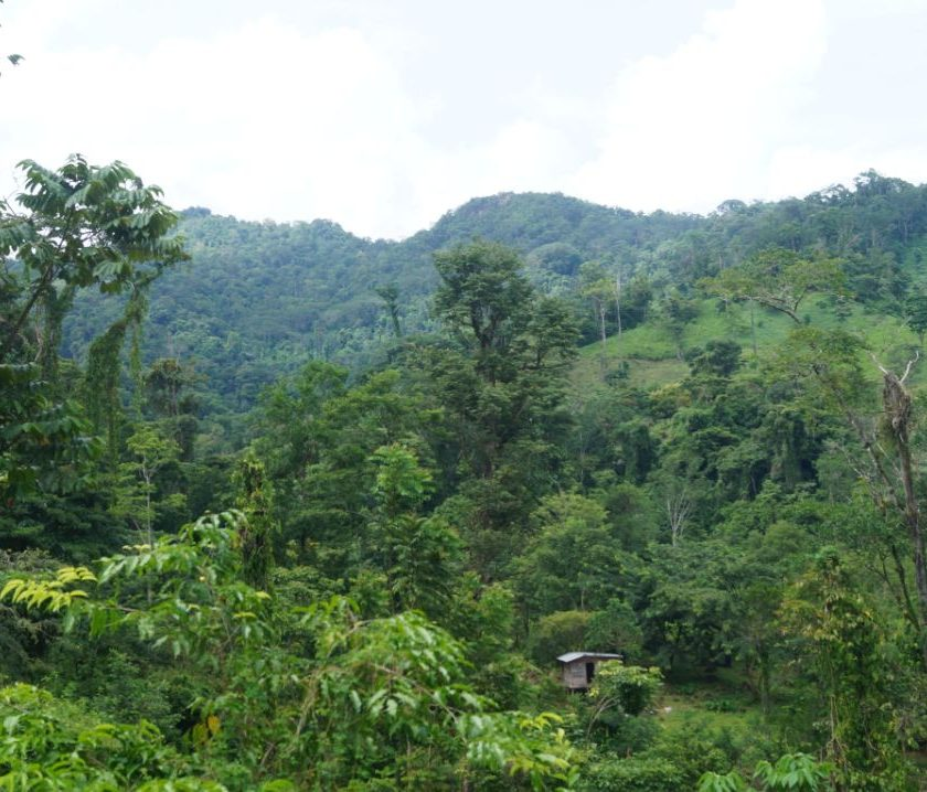 El asentamiento de colonos en el corazón de Bosawas, sigue ocasionando graves daños a esta reserva.