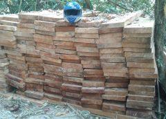 Millonaria incautación de madera preciosa en Rosita