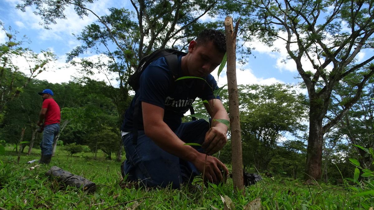 Ambientalistas dicen que se deben reforestar zonas de Bosawas.