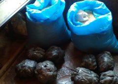 Detienen a hombre con dos sacos de marihuana en Siuna